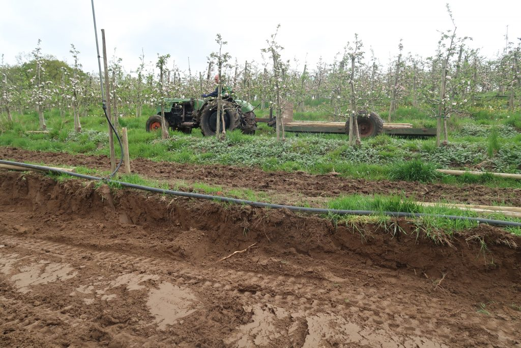 Der Boden wird für eine Neuanpflanzung von Apfelbäumen vorbereitet.
